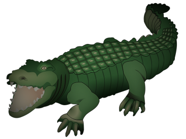 Drawing of a crocodile